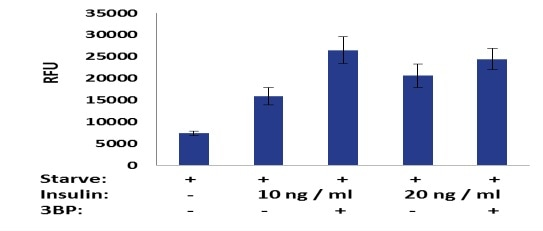 3T3-L1 cells were plated overnight, then serum starved for 24 hours. 0.5 mM 3BP and 10 or 20 ng/ml insulin were then added to stimulate glucose uptake for 30 minutes. Glucose in cells was detected using the standard procedure described above.