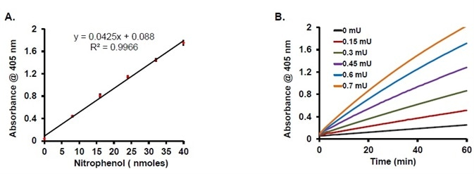 (A) Nitrophenol-standard curve (8–40 nmole), error bars indicate SD (n = 3). (B) Kinetic activity curves using different amounts of CA positive control in the assay.