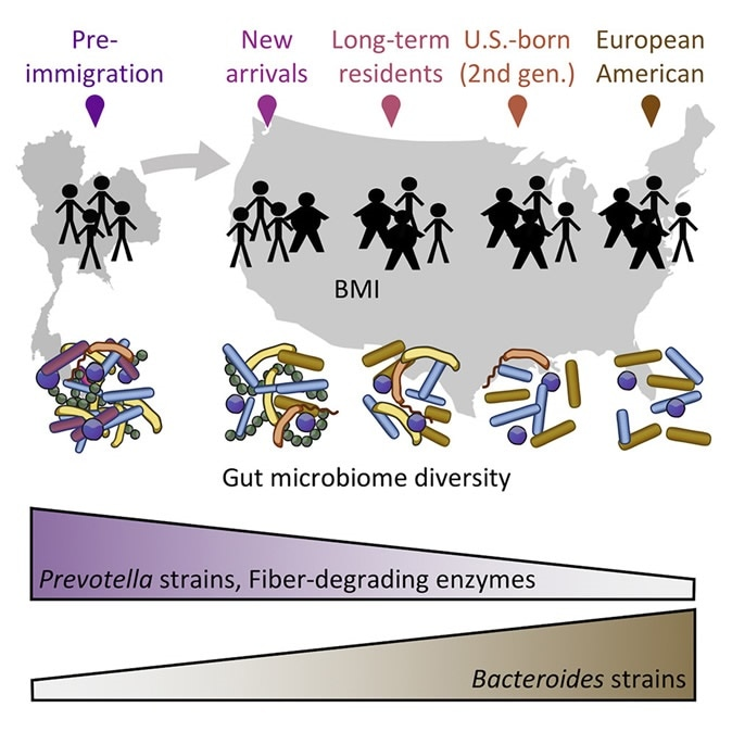 US Immigration Westernizes the Human Gut Microbiome