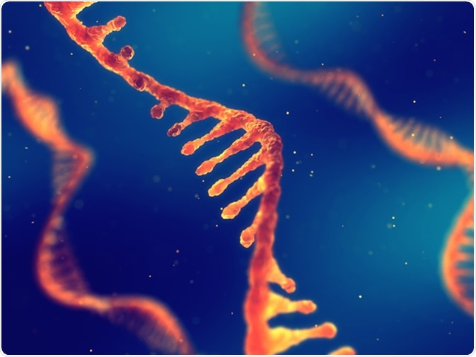 Single strand ribonucleic acid, RNA research 3d illustration. Image Credit: nobeastsofierce / Shutterstock