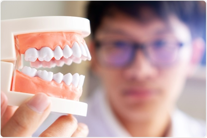 Dentist with teeth model. Image Credit: mojo cp/ Shutterstock