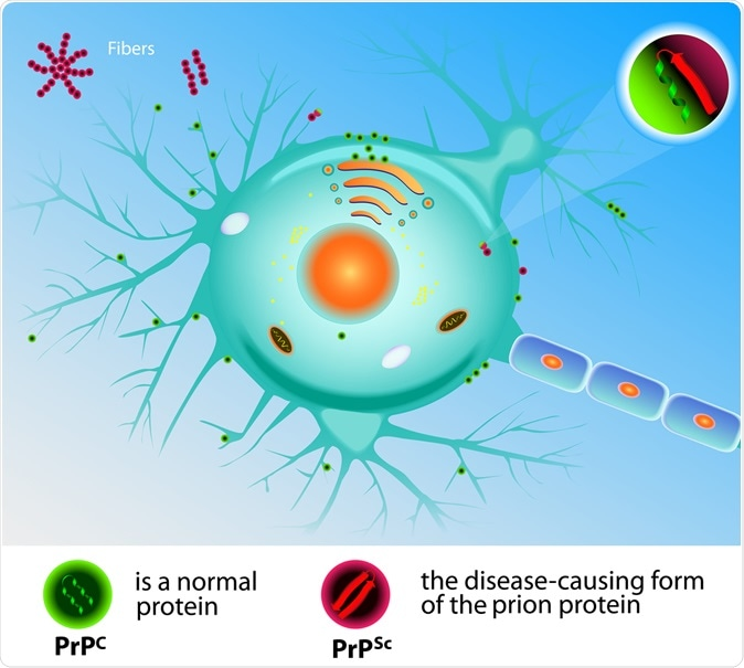 Prion Theory. Mad Cow Disease Prions. Image Credit: Designua / Shutterstock