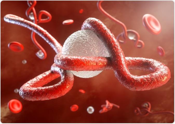 Ebola virus attacks the immune system illustration: Image Credit: Crevis / Shutterstock