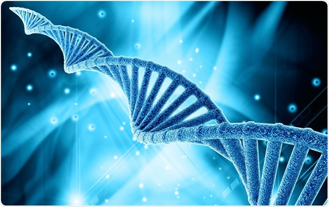DNA structure illustration. Liya Graphics / Shutterstock