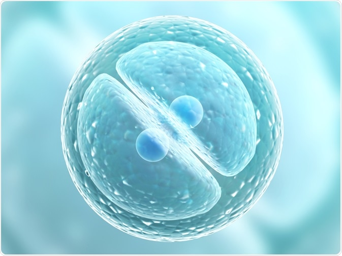 Cellule eucaryote subissant la mitose. Par frenta de Lukiyanova Natalia