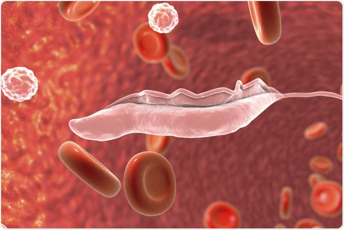 Sleeping sickness parasites, 3D illustration. Trypanosoma parasites transmitted by tse-tse fly and causing African sleeping sickness. Image Credit: Kateryna Kon / Shutterstock