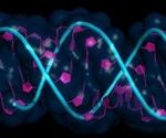 Short Hairpin RNA (shRNA) Interference