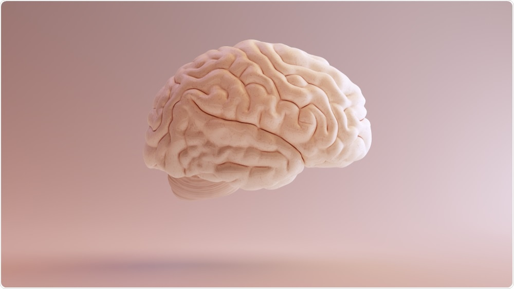 Pink illustration of the human brain - used to study neurological diseases with the CLARITY technique - by 80