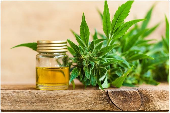 CBD oil next to cannabis plant (origin) - photo By ElRoi