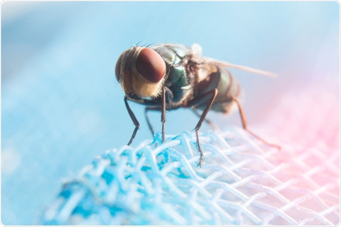 Picture of a tsetse fly, the carrier of Trypanosomiasis, or african sleeping sickness - taken by By Krumao