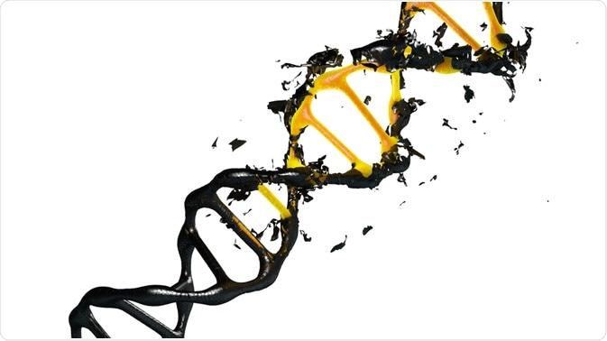 Illustration of DNA degradation - by Pinhead Studio
