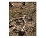Major soil organic matter compound battles chronic wasting disease