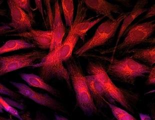 Experts from Shanxi Eye Hospital discuss biophotonics in photomedicine
