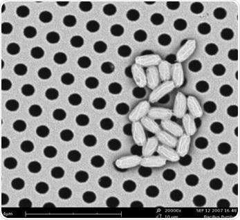 SEM image of Bacillus Pumilus.