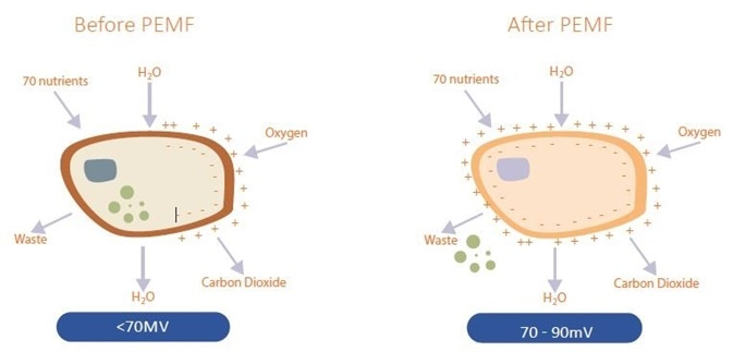 PEMF effects on cells