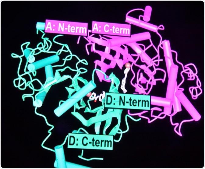 Proteomics. Nuove tecnologie per lo studio delle macromolecole biologiche. Credito di immagine: Sergei Drozd/Shutterstock