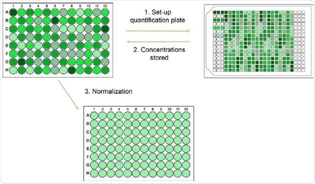 Schematic workflow of the Fluent quantification and normalization protocol. (1) Samples prediluted (not shown) and pipetted into the quantification plate. (2) Concentration of each sample measured and stored. (3) Samples normalized in a new microplate.
