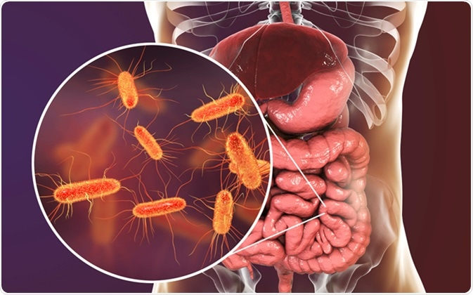 Intestinal microbiome, 3D illustration showing anatomy of human digestive system and enteric bacteria Escherichia coli, E. coli, colonizing jejunum, ileum, other parts of intestine. Gut normal flora. Image Credit: Kateryna Kon / Shutterstock
