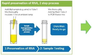 Rapid sample processing. Urine samples were collected in preservation reagent immediately prior to storage for stability assessment.