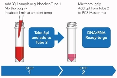 Rapid sample processing protocol. See 'Methods' for further detail