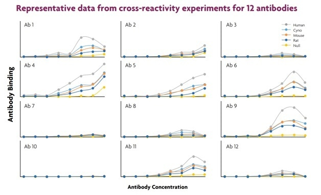 Cross-reactivity experiments enable the rapid discovery of antibodies that bind to both human and animal receptor homologues. Using this approach, potential drug candidates that can be used in humans and also be tested in preclinical models of efficacy and toxicity.