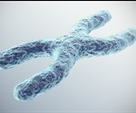 Researchers discover protein responsible for X chromosome inactivation