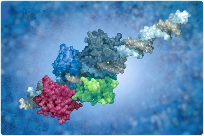 DNA-protein complex. Surface representation of transcription factors (interferon regulatory factors) bound to the interferon-beta enhancer; rendered from PDB structure 2O6G. Image Credit: vitstudio / Shutterstock