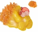 Lipidomics in Research