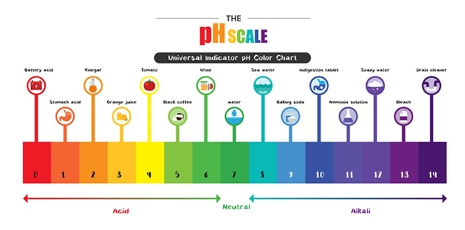 The pH scale Universal Indicator pH Color Chart diagram acidic alkaline values common substances. Image Credit: Trgrowth / Shutterstock