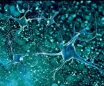 Scientists discover new protein involved in neuron formation