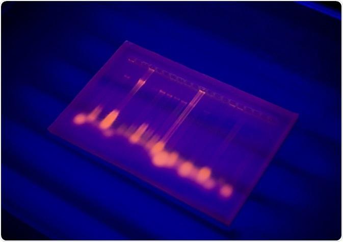 Fluorescent multiplex PCR profile