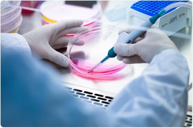 Scienziato del laboratorio che pipetta i terreni di coltura dalla capsula di Petri di coltura cellulare.