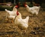 Another Vietnamese falls victim to bird flu