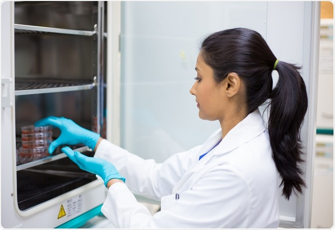 Scientist putting cell culture plates into sterile incubator.