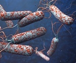 Study sheds light on how cholera became a human pathogen
