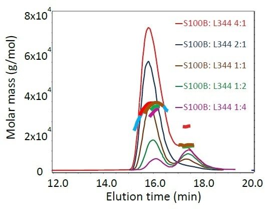 SEC-MALS results of S100B and the mutant p53(293- 393)L344P, pre-incubated in different stoichiometric ratios: light scattering chromatograms and calculated molar masses across each peak. Curvature of the molar masses at the 16- minute peak indicates dynamic equilibrium of the complex.