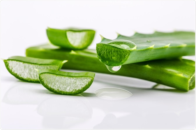 Aloe vera. Image Credit: Fishman64 / Shutterstock