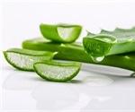 Health Benefits and Dangers of Aloe Vera