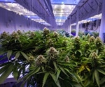 Component of cannabis could help in psychosis