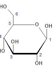 Haworth projection for the cyclic form of D-glucose