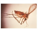 Researchers report increasing incidence of visceral leishmaniasis in Brazil