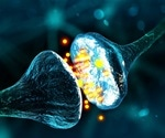 Study reveals structure of potential drug target in neurological conditions