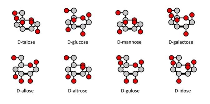D-aldohexose sugars: allose, altrose, glucose, mannose, gulose, idose, galactose, talose. Haworth-like projections. Image Credit: molekuul_be / Shutterstock