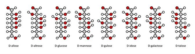 D-aldohexose sugars: allose, altrose, glucose, mannose, gulose, idose, galactose, talose. Fischer-like projections. Image Credit: molekuul_be / Shutterstock
