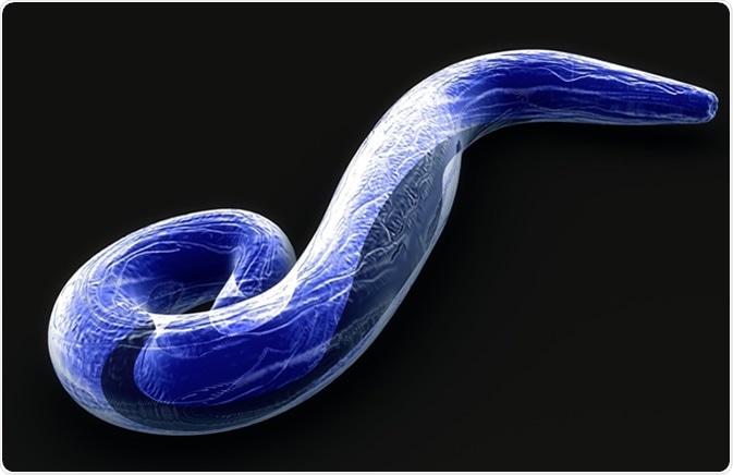 Illustratiom del falciparum 3d del Plasmodium. Haber de imagen: Sciencepics/Shutterstock