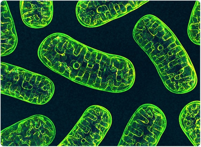 Mitocondrias. Haber de imagen: 3d_man/Shutterstock