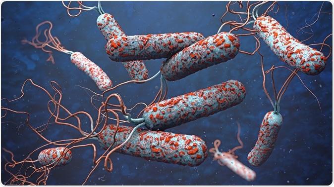 3d illustration of cholera pathogens. Image Credit: Christoph Burgstedt / Shutterstock