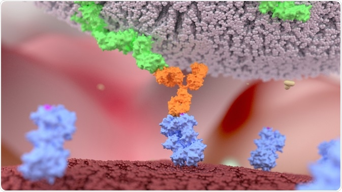 Illustration of a bispecific antibody bound to a protein on a tumor and a T cell - By Alpha Tauri 3D Graphics