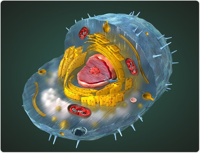 Metabolites within a cell - an illustration by Christoph Burgstedt