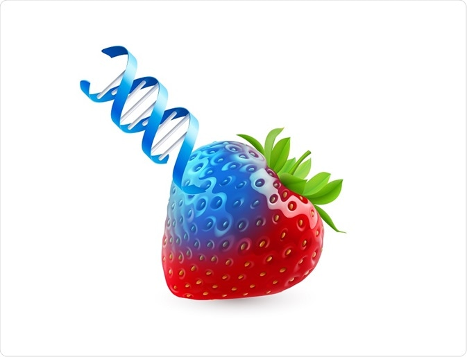 Illustration of strawberry (food) with DNA (genes)